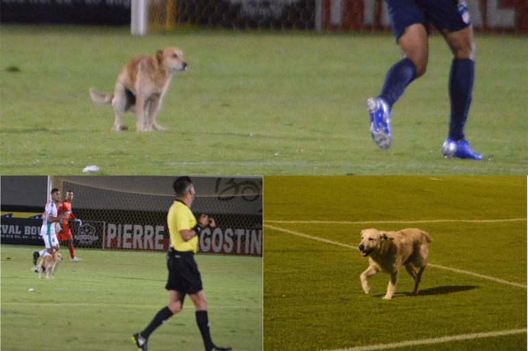 cachorro-atrevido-e-gato-habilidoso-roubam-a-cena-no-futebol-latino-Futebol-Latino-25-07